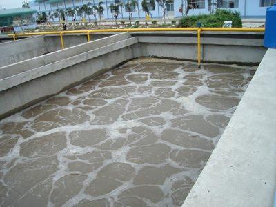 Thành phần vi sinh tham gia vào quá trình xử lý nước thải
