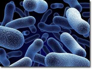 Công nghệ vi sinh hữu hiệu – EM