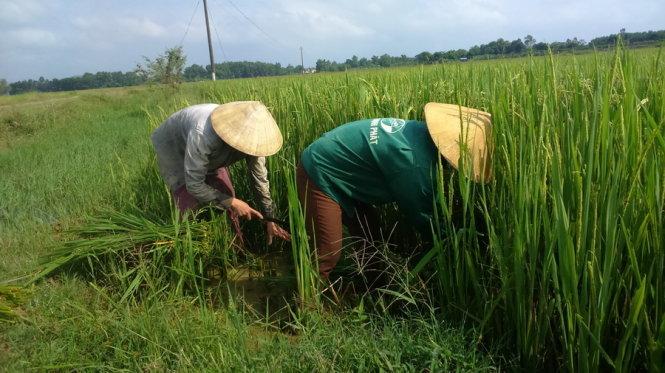 Ăn cá urê, rau dầu nhớt, uống chè phân lân đặc sản Việt Nam